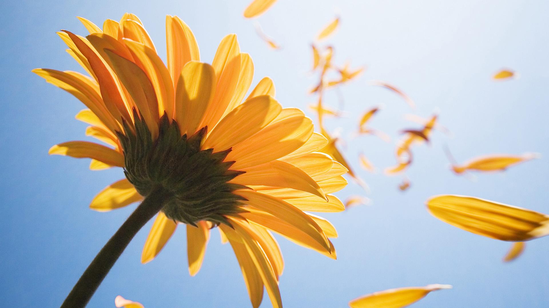 Photo of Цветок и ветер. Короткая притча.