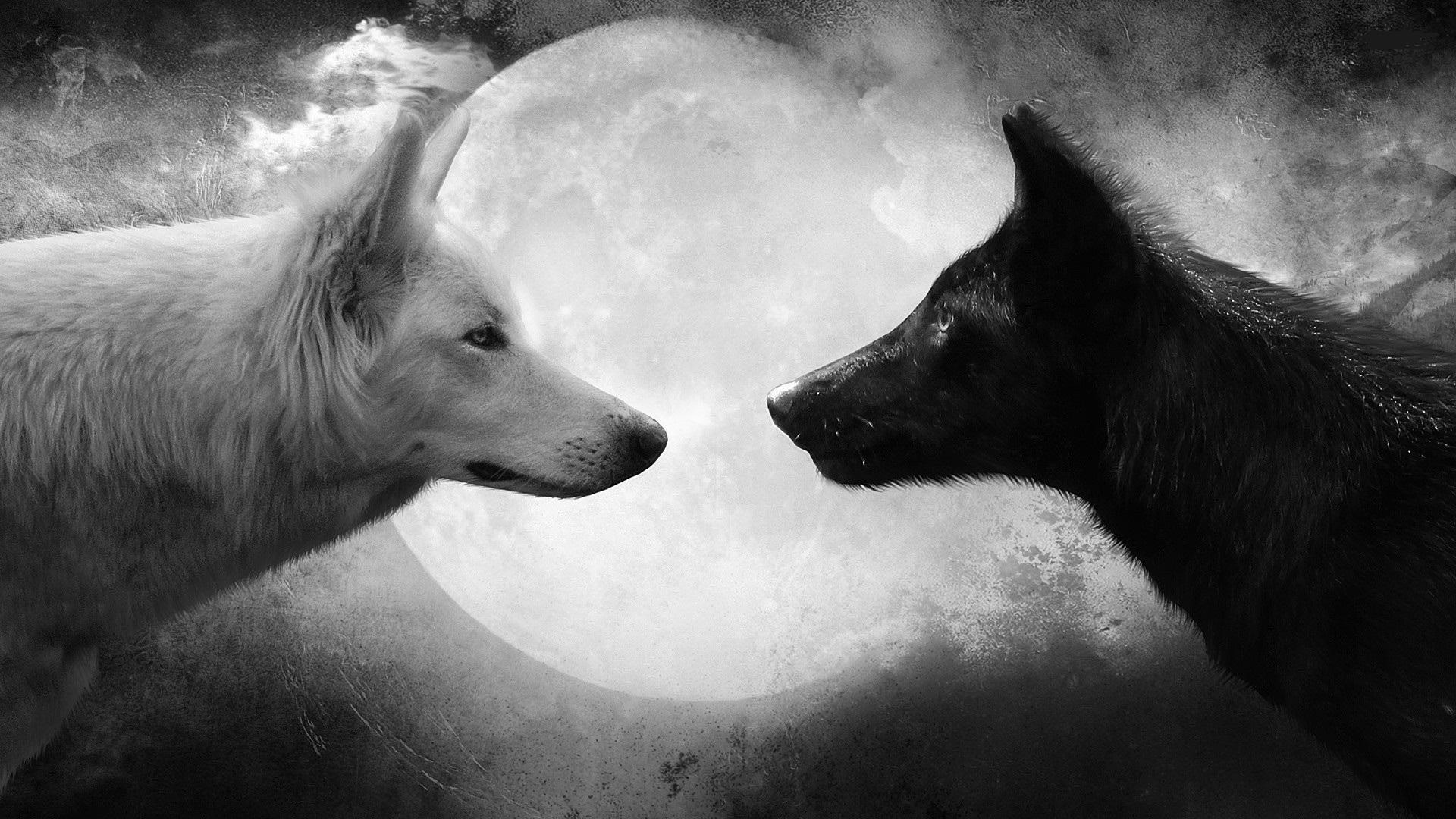 Photo of Два волка. Мудрая притча.